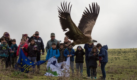 Helmar, Jana and Tempestosa, three Griffons released in Bosa